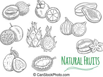 Exotic tropical fruits isolated sketch icons - Exotic and...