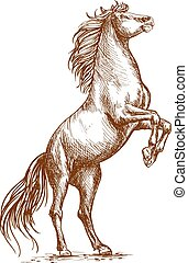 Brown horse rearing on hind hoof sketch portrait