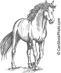 White horse standing with lifted hoof