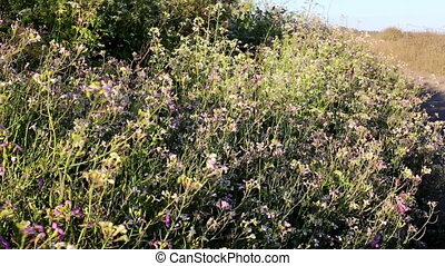 California wild flowers blowing - Wind blown California wild...