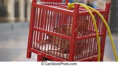 Birds in cage for sale. Bangkok, Thailand - Small red cage...