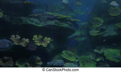 Fish swimming in oceanarium - Different kinds of fish...