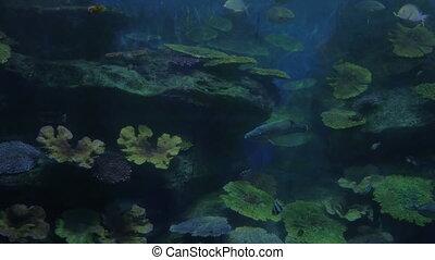 Fish swimming in oceanarium - Different kinds of fish...