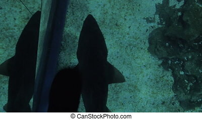 Small shark swimming under glass floor in oceanarium - Feet...