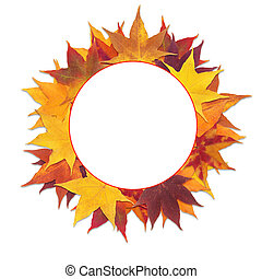 frame maple leaves - Round frame with red and yellow maple...