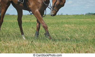 Close-up view on the hooves of horse's legs at a field