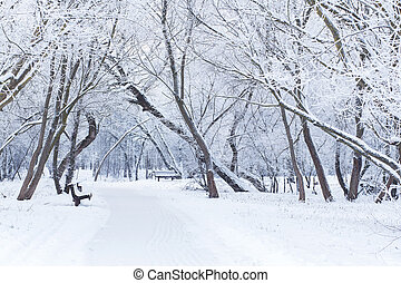 Snowy winter day - White snow in the park snowy winter...