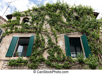 Old house covered by ivy in Sirmione on Garda Lake, Italy