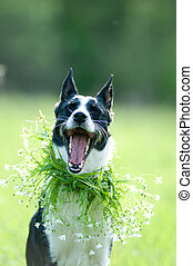 Mixed breed dog portrait outdoor wearing flower collar