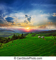 Sunset Ban Papongpieng Rice Terraces, Chiang Mai, North of...