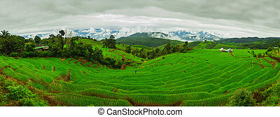 Ban Papongpieng Rice Terraces, Chiang Mai, North of Thailand