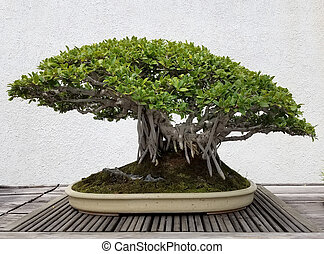Bonsai banyan tree - Detailed Bonsai and Penjing landscape...