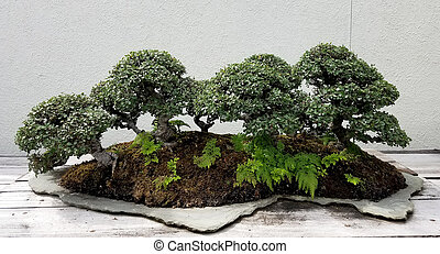 Bonsai miniature forest - Bonsai and Penjing landscape with...