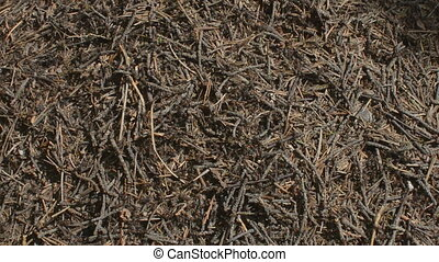 Anthill and Ants - Anthill with ants moving around and...
