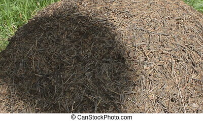 Ants and Anthill in a Shadow - Anthill with ants gathered...