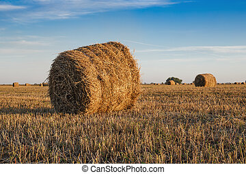 Agricultural field with straw bales