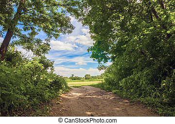 Country road near green trees in a sunny summer day