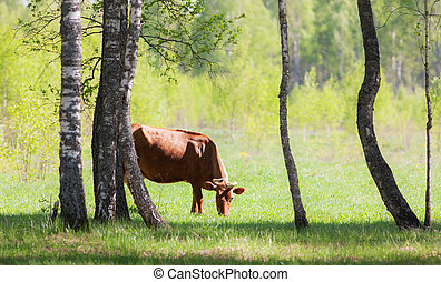 cow on green meadow