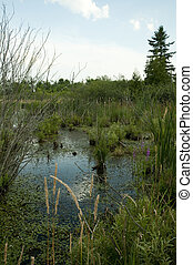Bog with wild flowers and dead trees