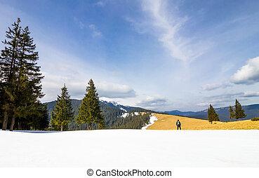 posición, montañas, solo, invierno, pino, brillante,...