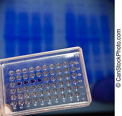 DNA testing in the laboratory Well plate with samples on the...