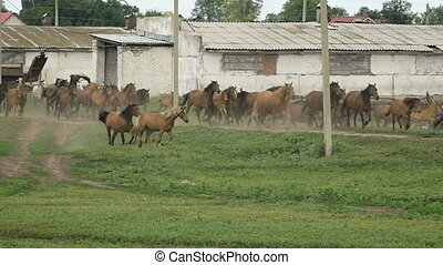 Herd of horses running on the pasture in autumn. Freedom....