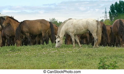 Herd of horses in the russian prairie
