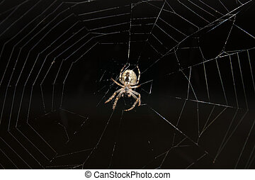 Spider on a web - Spider hanging on a web