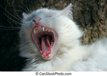 Cat yowling after eating