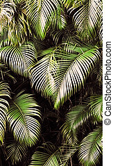 Jungle background of tropic rain forest tree and leaf