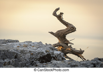 Deadwood on rocks, dried wood that once was a tree