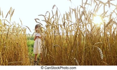 Little girl stands about a wheat field. The sun's rays make...