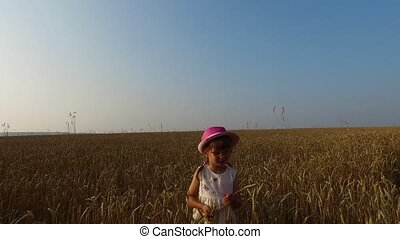 Little girl collects wheat spikelets. Wheat turned yellow....
