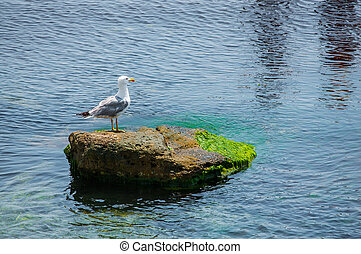 Seagull sitting on green rock in water near the Nesebar...