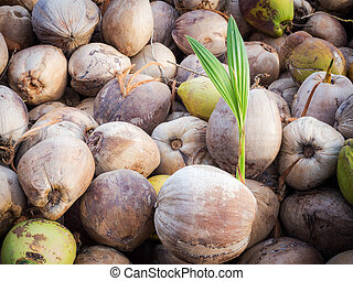 Coconut Plants are well known for their great versatility as...