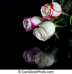 Three white roses with pink edges of petals on black -...