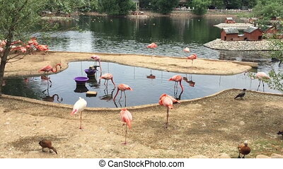 Group pink flamingo birds on the lake