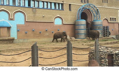 Elephant in the Moscow zoo, Russia - The elephant in the...