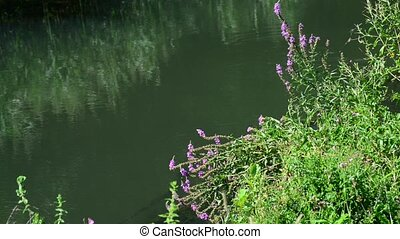 Flowers on river bank in Russia - Flowers on the river bank...