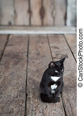 cat - Black and white colours cat sitting in front of house,...