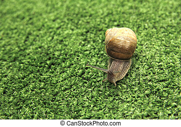 snail crawling on grass