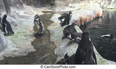Penguin in the Moscow zoo Russia.