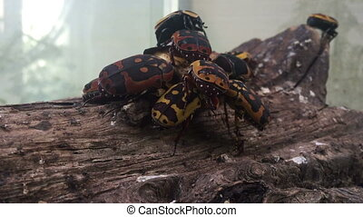 Large cockroaches sitting on a tree