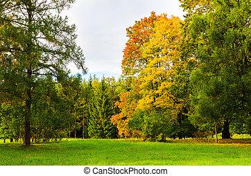 colorful autumn park