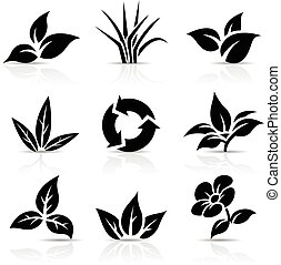 Black Leaves isolated on white