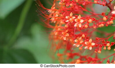 red flowers close copyspace audio - tropical red flower with...