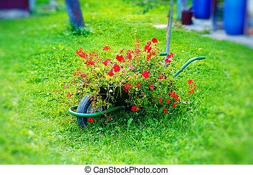minuscule, décoratif, jardin, brouette, entiers, de, rouges,...