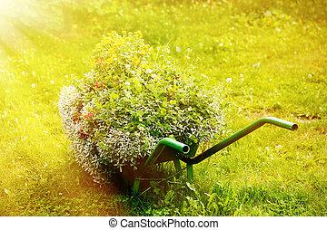 décoratif, jardin, brouette, à, tas, de, Usines, sur, vert,...