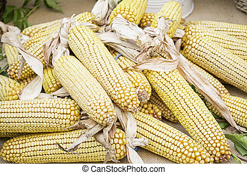 Corn in greengrocers - Ears of corn in feed market, nature