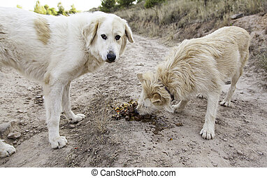 Dogs eating friends - Dogs eating together in field, nature